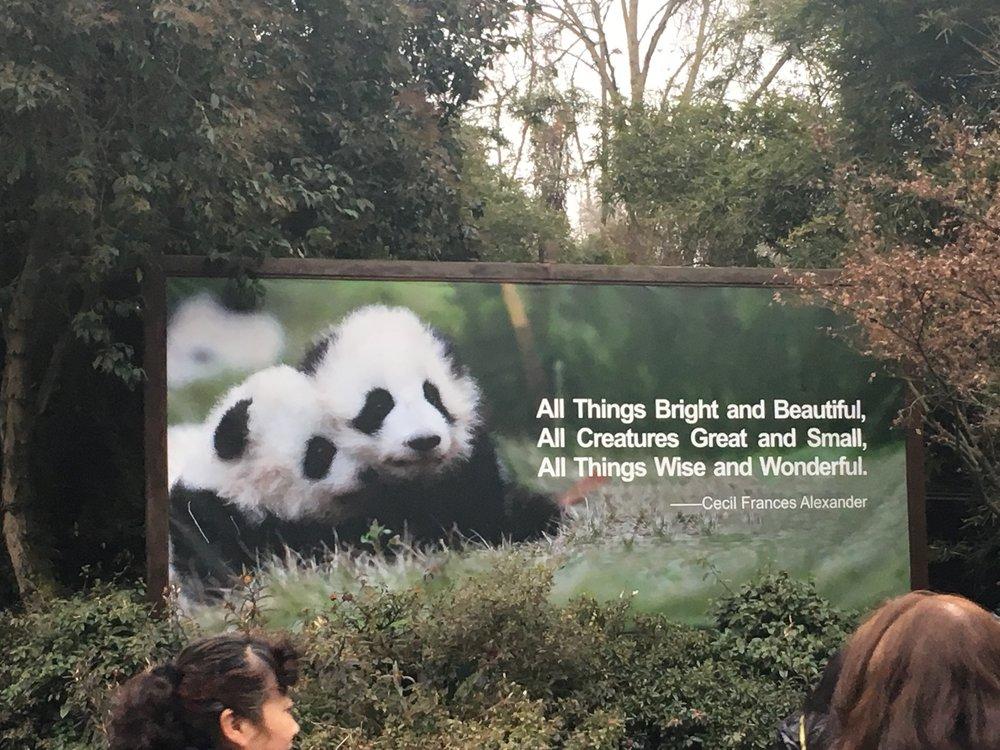 Panda - 1 (3).jpg