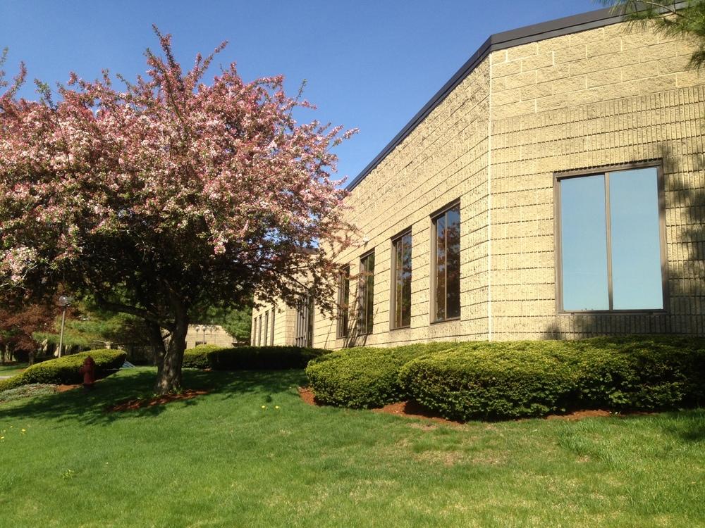 Corner with blooming tree, 5-11-15.jpg