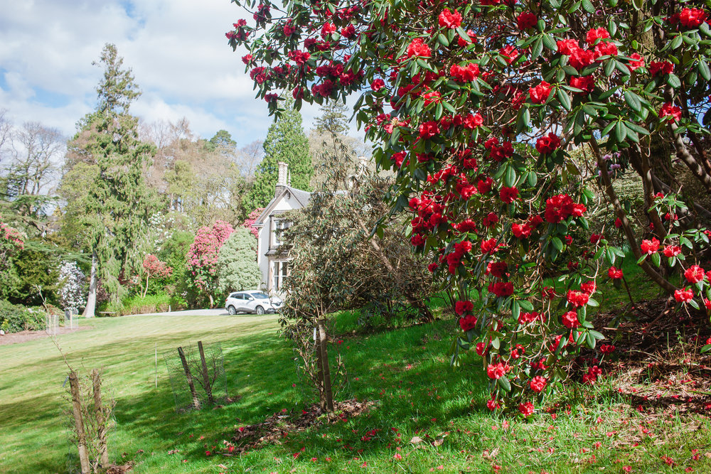 The deep red trees dotted the landscape and the stunning house can be glimpsed in the background.