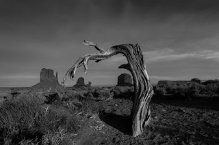 Old tree oversees Monument Valley.