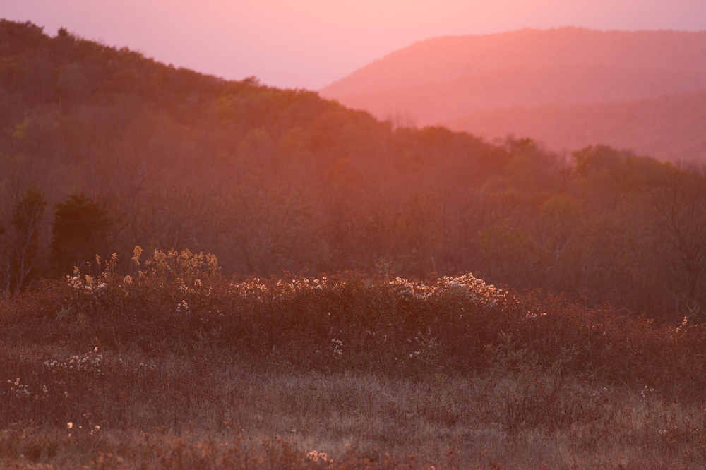 The sun, just out of the frame at right one half hour before sunset produced this unexpected pinkish hue. Shooting into the light can often result in flat, monochromatic images. ISO 200, f4.5 @ 1/80, with a Nikon 300 2.8.