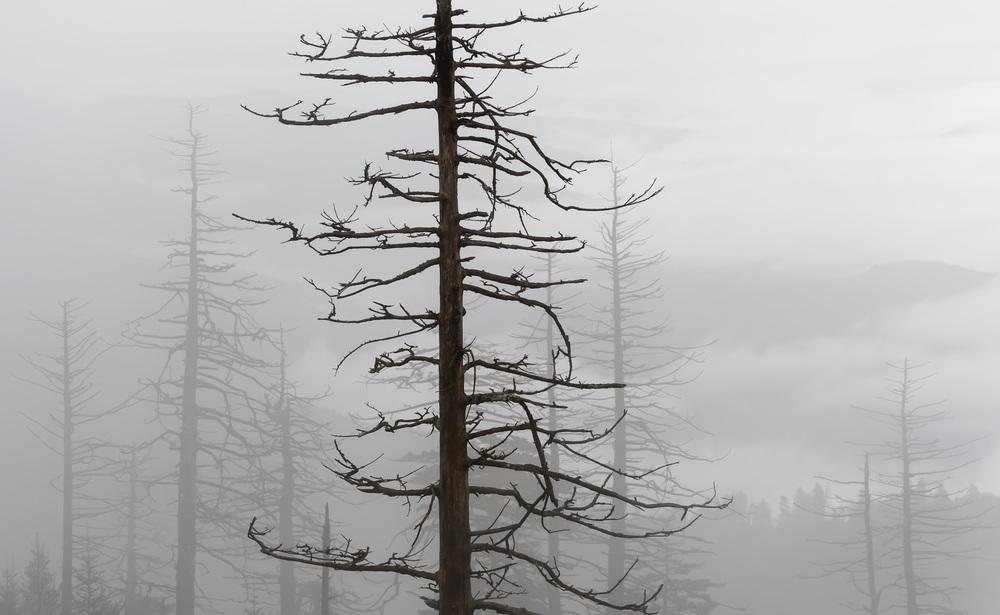 Smokey Moutain National Park