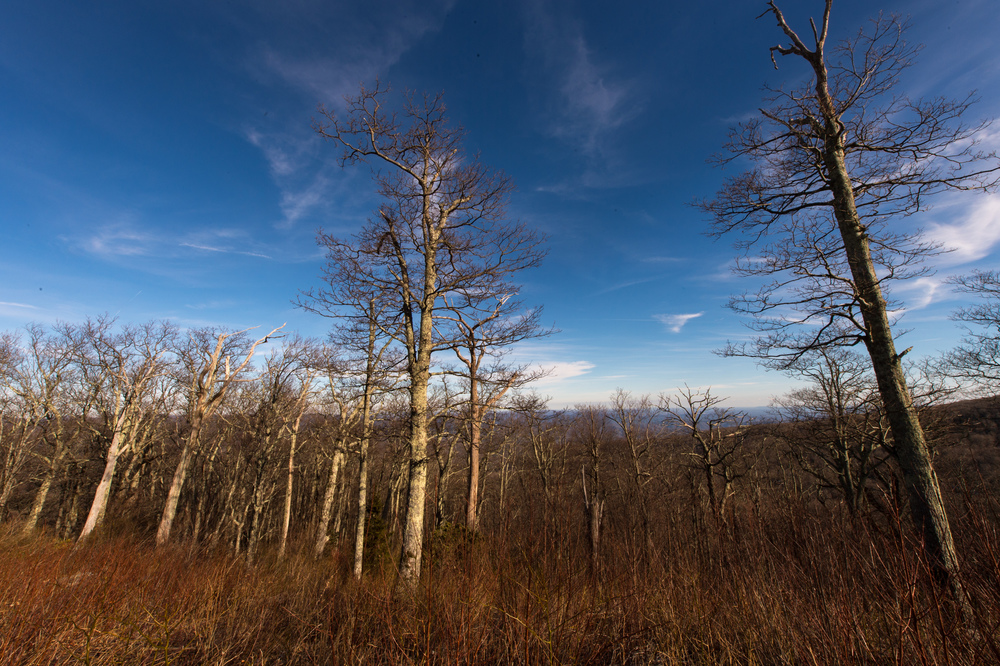 Along the very short section of the Blue Ridge Parkway I traveled, there were plenty of scenic overlooks, without much of a grand view, but these trees still proved interesting when taken from a low angle with a 14-24mm, 1/125 @ f22, ISO 200