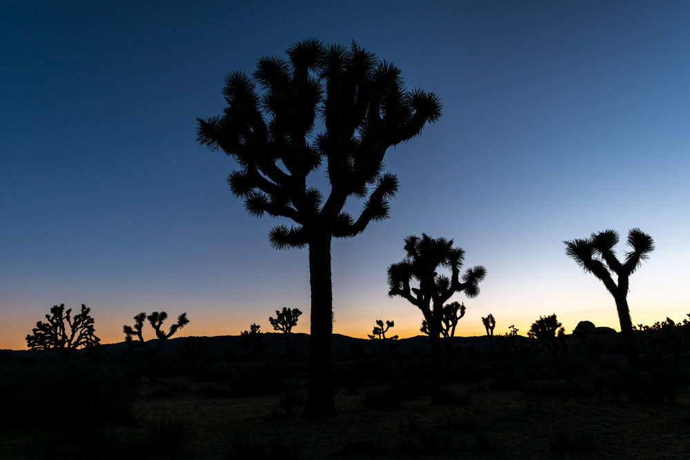 One of the best things about photographing during the winter months is that the sun sets early enough that there is still plenty of time for dinner. What is difficult, however, is with close to 800,000 acres of land, how do you find the perfect spot to photograph that sunset in Joshua Tree National Park. During my travels through the park earlier in the day, I found a section with a lot of trees, so I returned to that spot and after about 20 minutes of walking around as the sun dropped behind a distant mountain, I found a nice composition and made my final photo of the trip.  Fujifilm X-Pro2 with a Fujinon XF 16mm f1.4 R WR, 1/60 @ f9.0, ISO 200 .