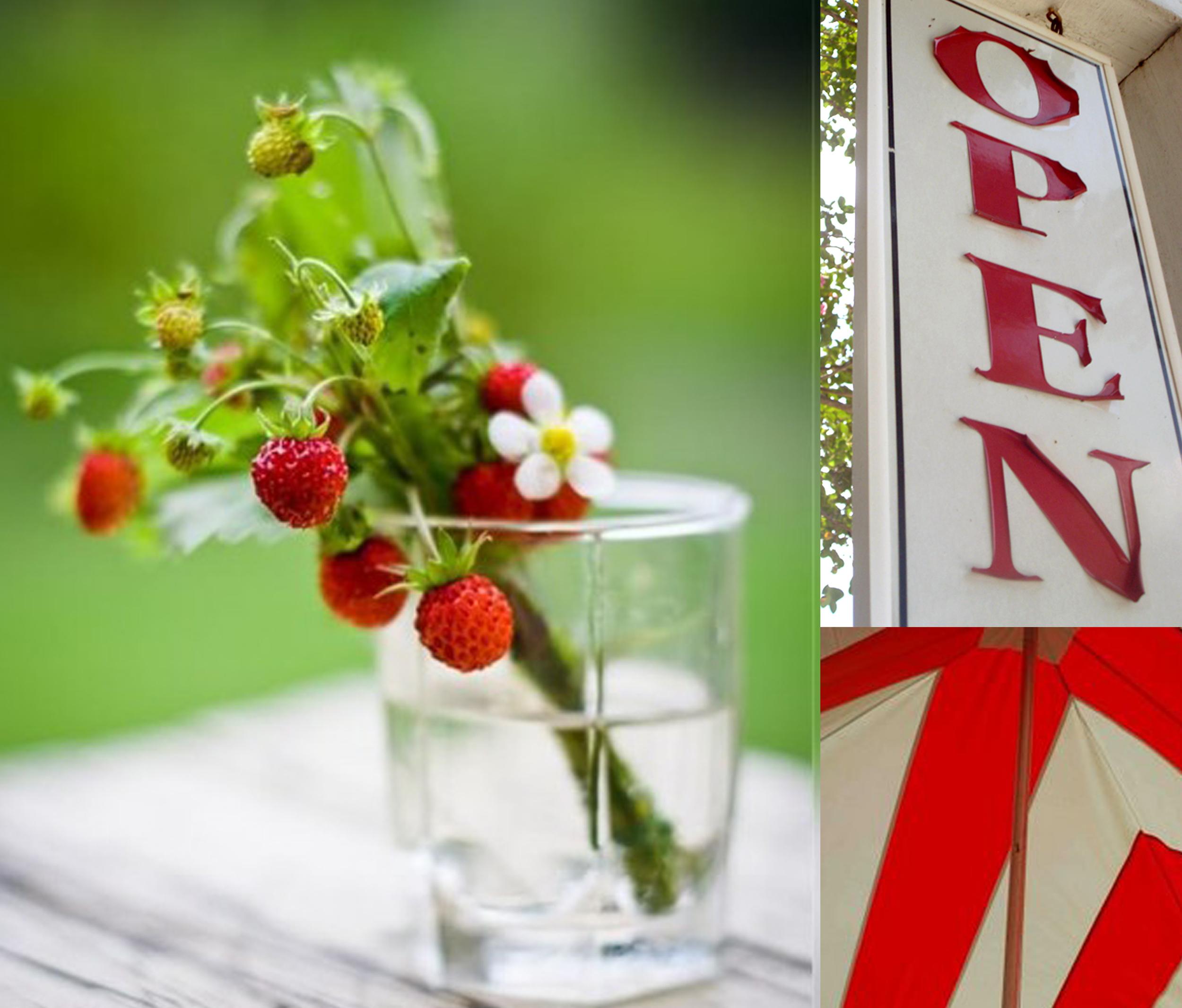 courtney khail color inspiration strawberry fields