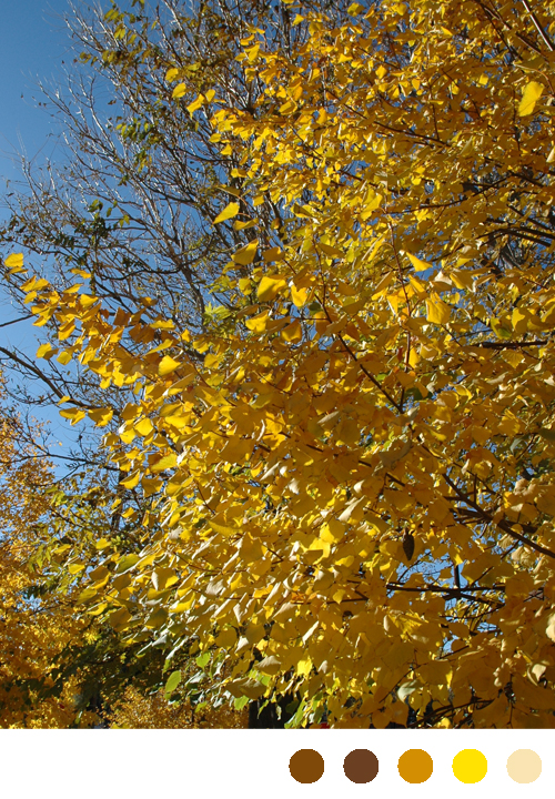 gold yellow and orange leaves via courtney khail