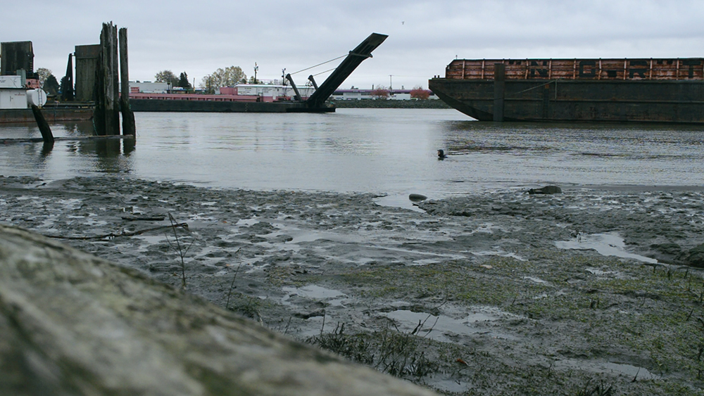 Mitchell Island, Fraser River | video still | 2015