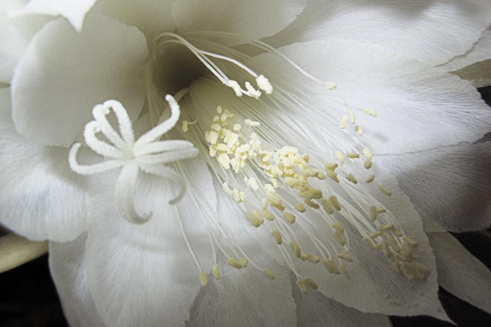 Bridal_Flower_2