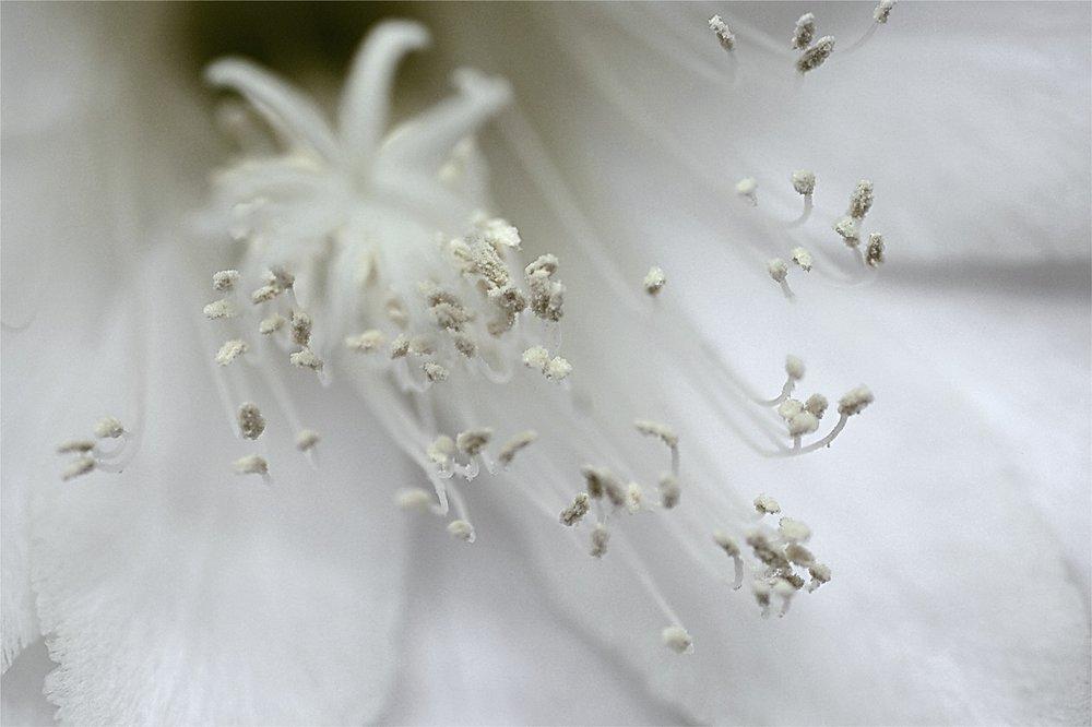Bridal_Flower_1