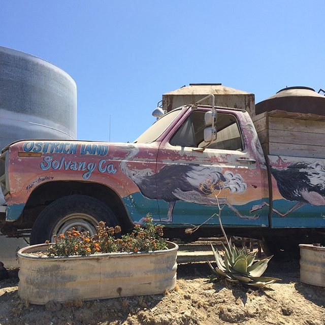 Adventures in wine country #ostrichland #wildlife #cars #vintage
