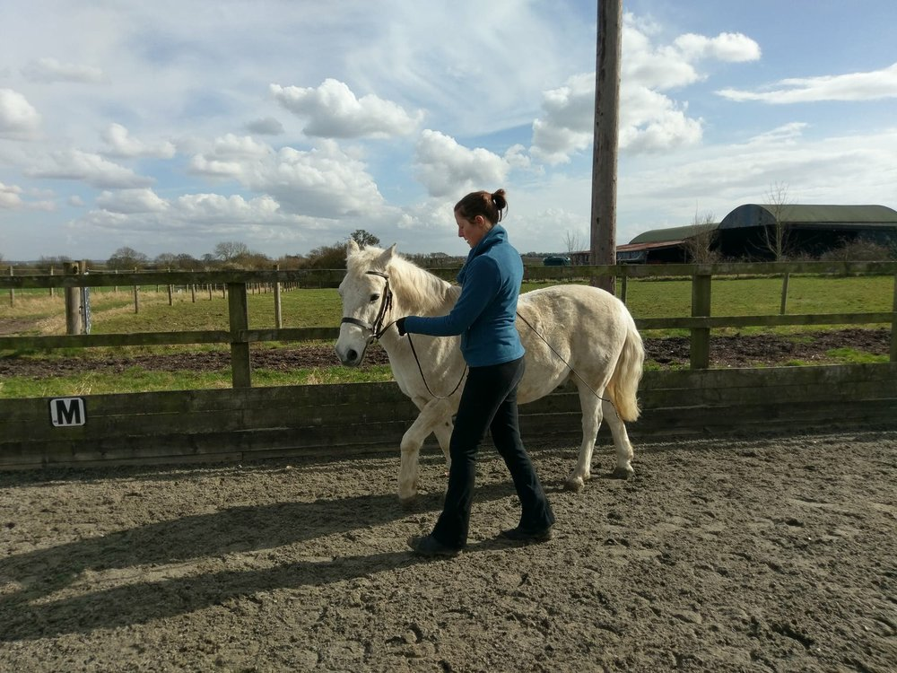First attempts of Shoulder In in-hand with Sally Smith's pony Jim.