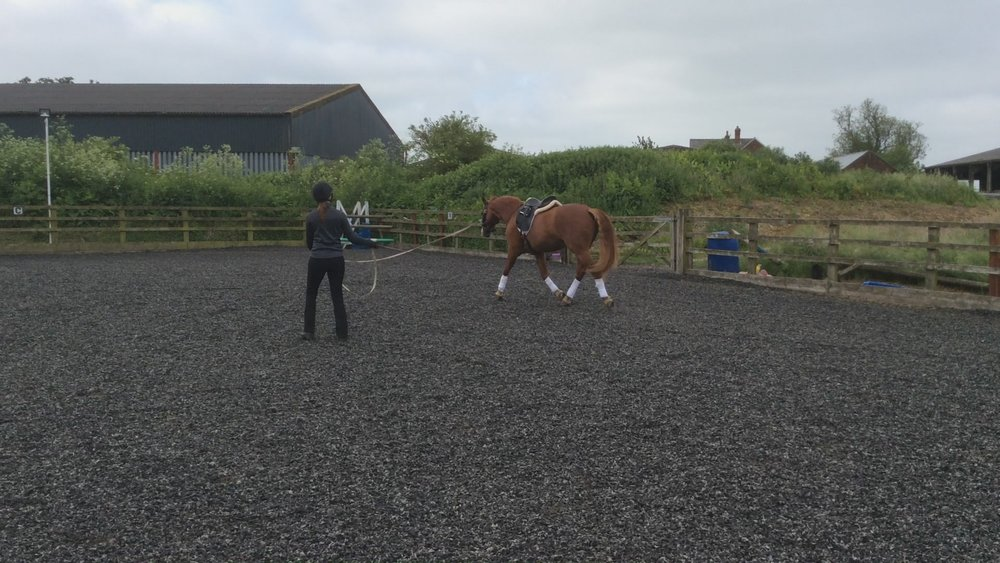 Lunge session with Diane Hayhurst's horse Tigger.