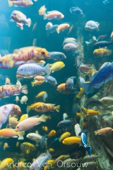 fish_mystic_aquarium_colorful_day_trip.jpg