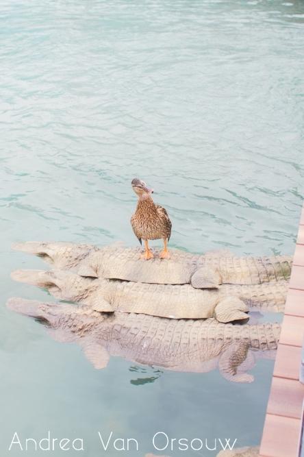 duck_mystic_aquarium.jpg