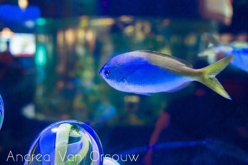 colorful_fish_mystic_aquarium.jpg