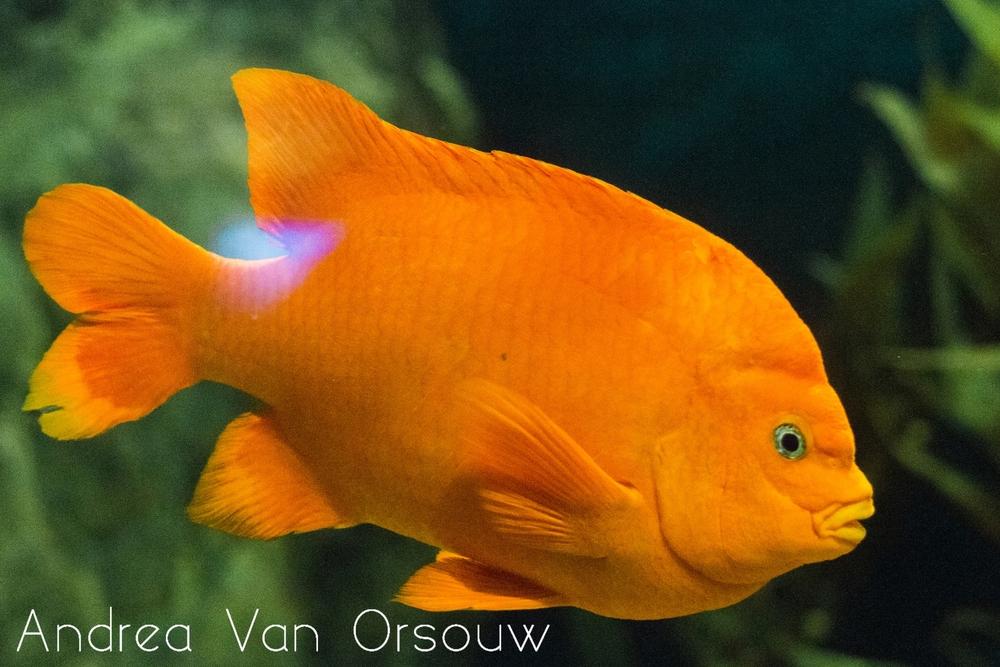 orange_fish_mystic_aquarium.jpg