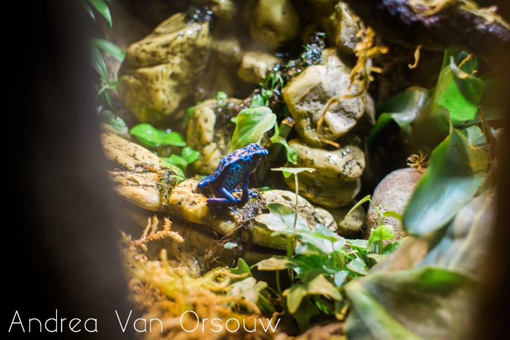 frog_blue_exibit.jpg