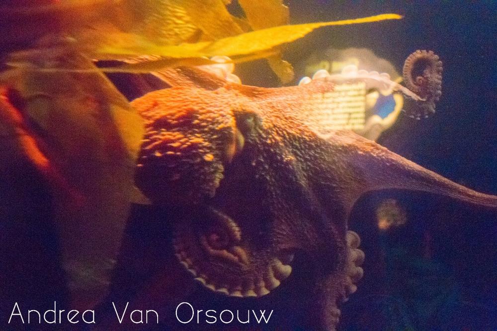 octopus_aquarium.jpg