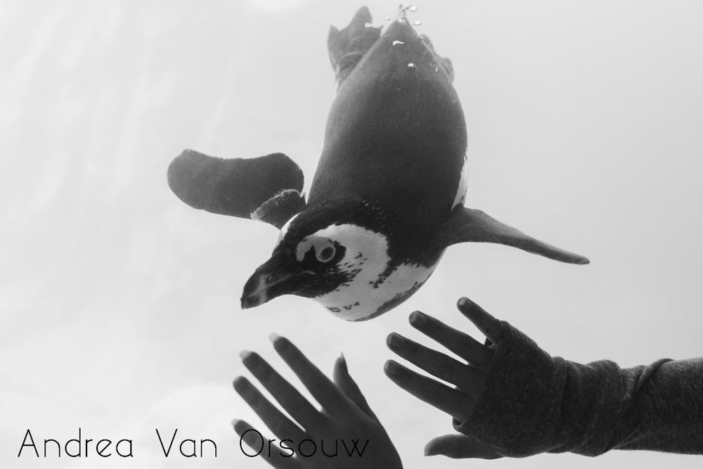 penguin_tank.jpg