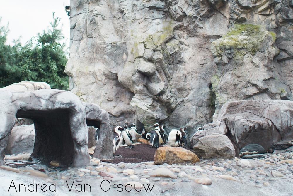 penguin_clan.jpg
