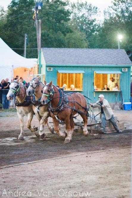 horse_pull.jpg