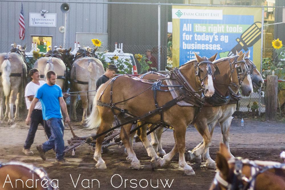 horses_horse_pull_durham_fair.jpg