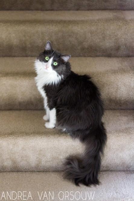 female_green_eyed_shy_cat_photography.jpg