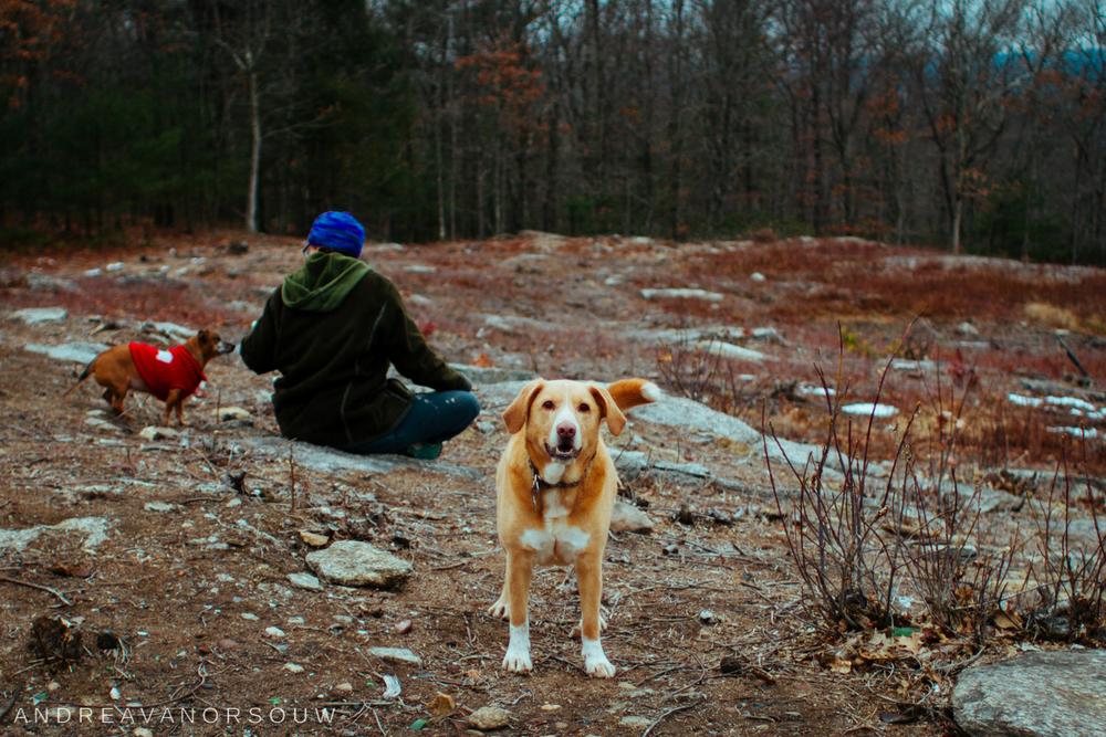 hiking_trail_dog.jpg
