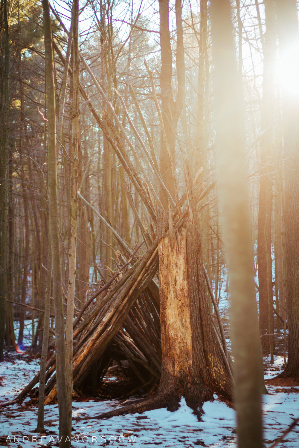 shelter_in_woods_ct_photographer.jpg