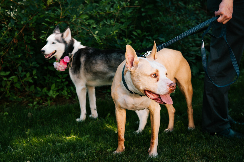 dogs-pets-wedding-rhode-island-connecticut-massachusetts-boston-wedding-photographer.jpg
