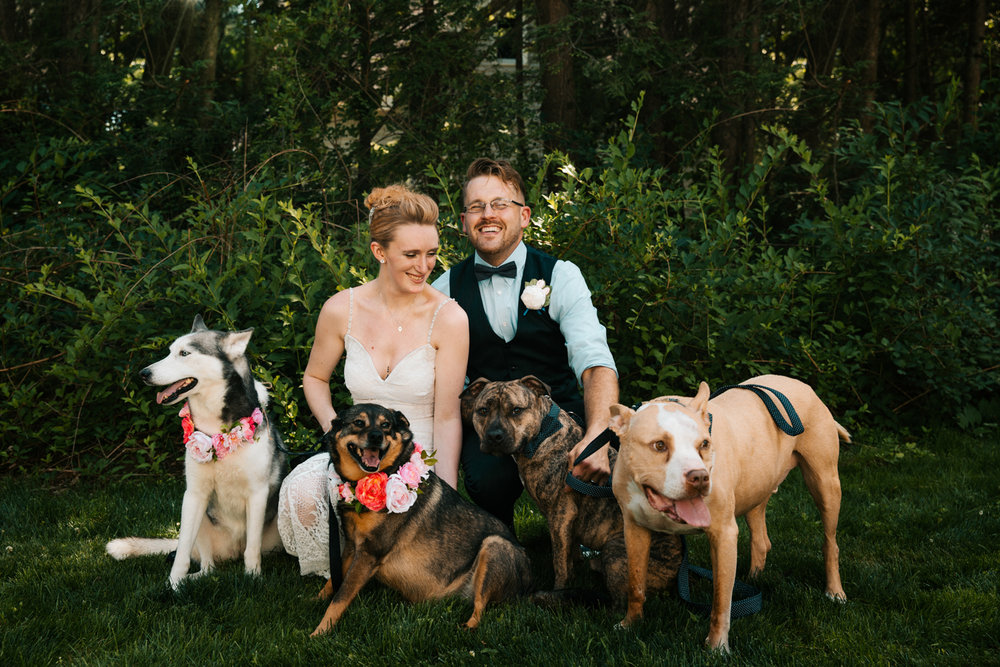 bride-groom-puppies-pets-dogs-happy-laughter-new-england-wedding-photographer-granby-connecticut.jpg