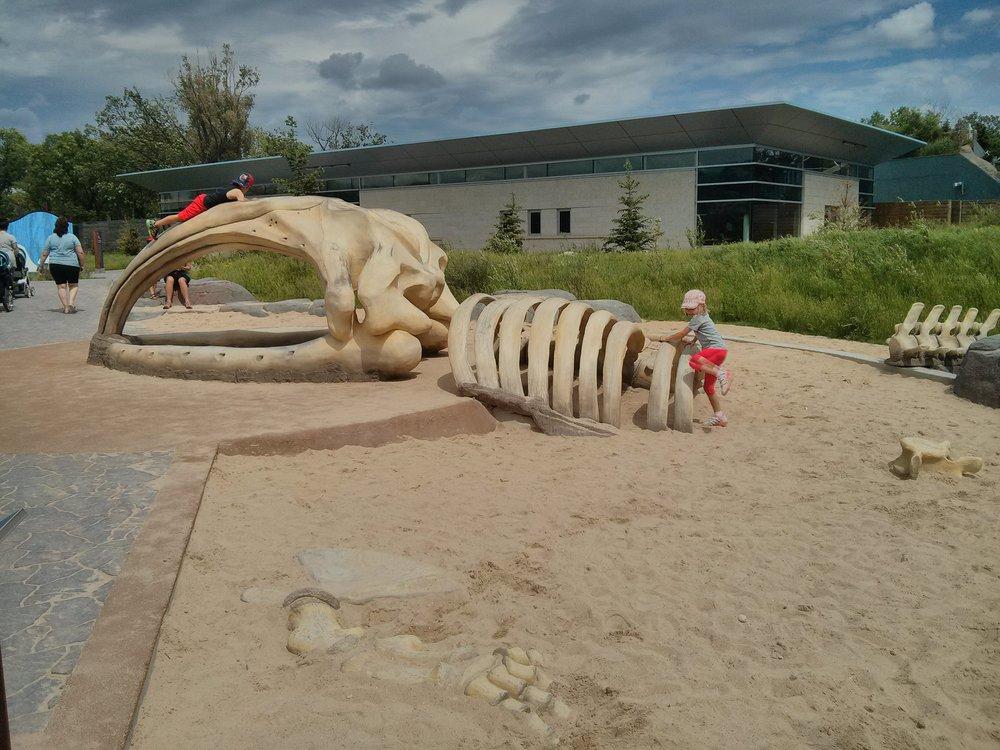 Whale skeleton playground