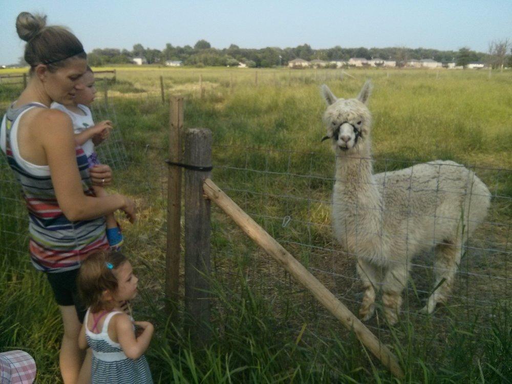 The new llama