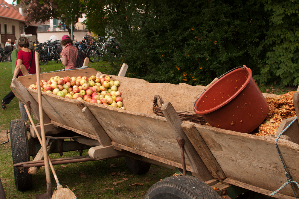 Apples ready to be pressed, and the pulp from those already juiced