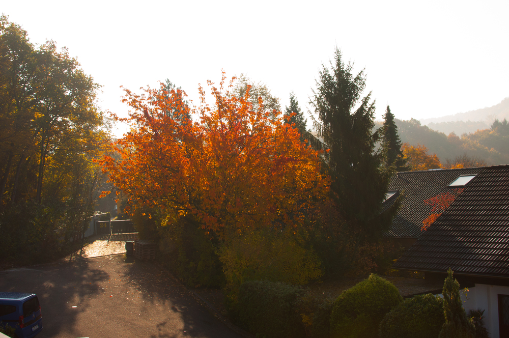 Fall colours outside our window