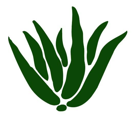 aloe Leaf.jpg