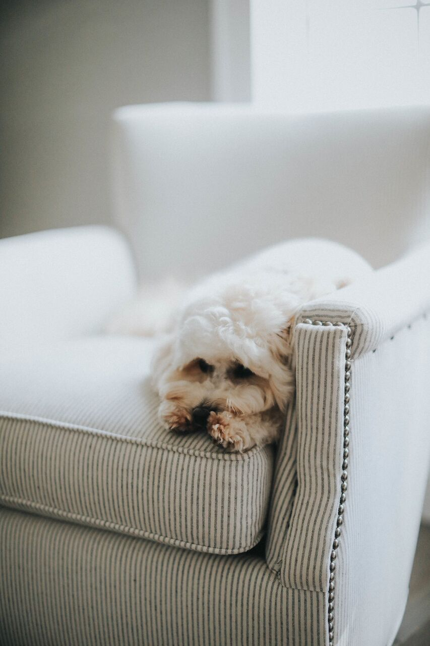 CB Kitchen chair with dog WhitneyNicholsPhotography-6028_preview.jpg