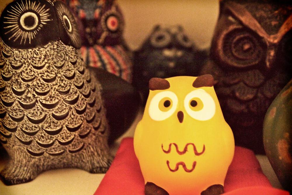 iQ_BKG_Site_GA_Owls.jpg