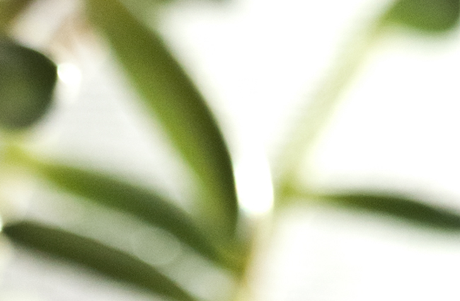 PlantSAKitchen.jpg