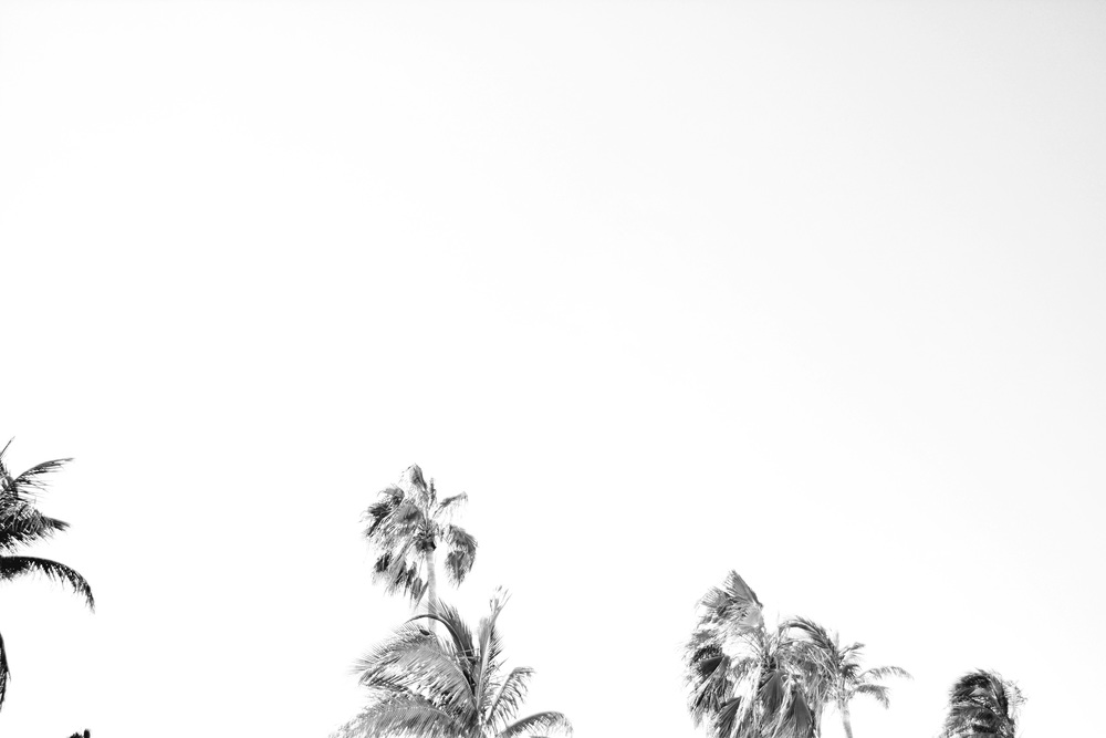 CancunBWPalmTrees.jpg