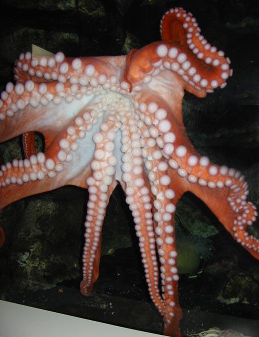 octopus-lo-res.jpg