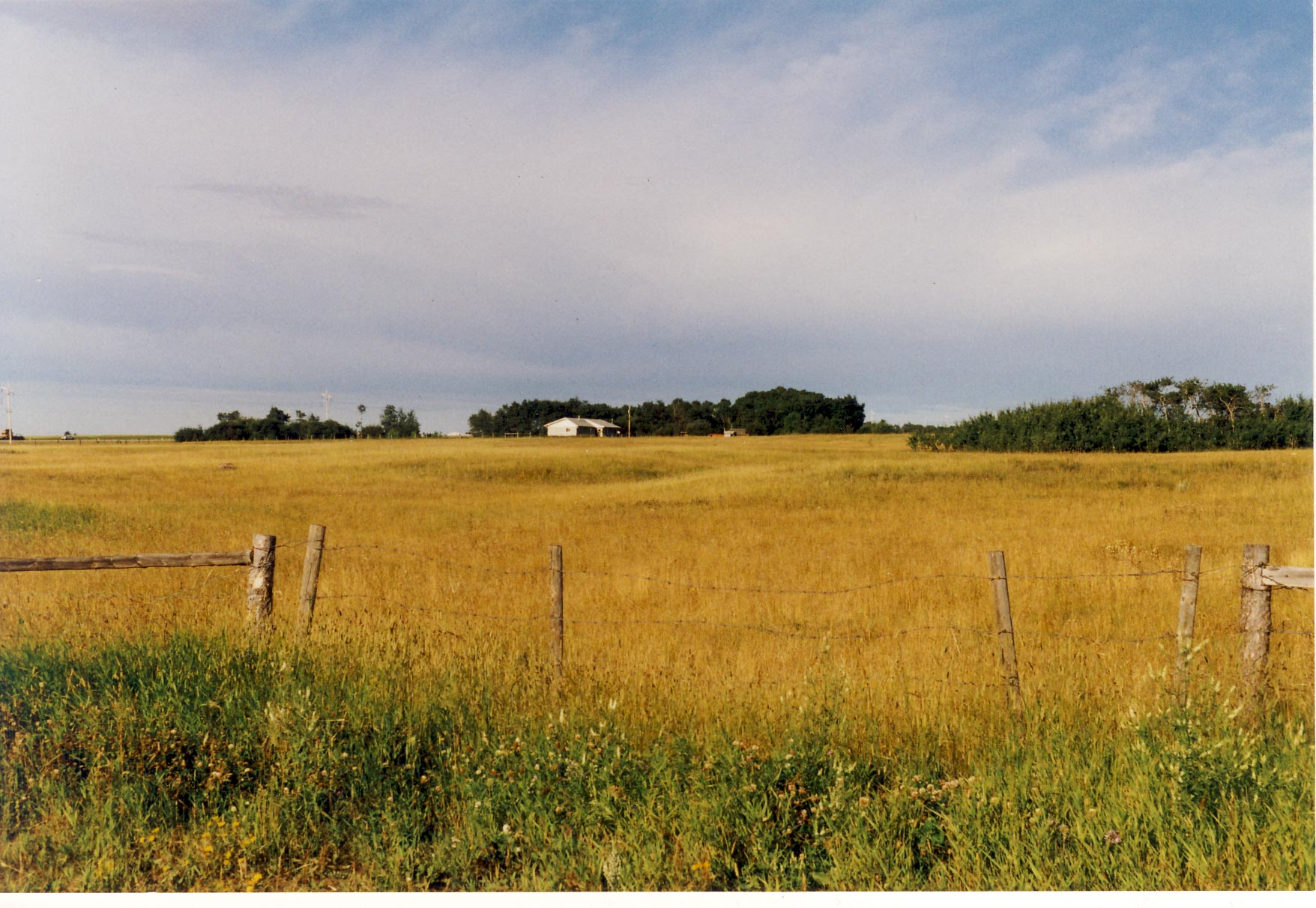 pasture of hay on the farm