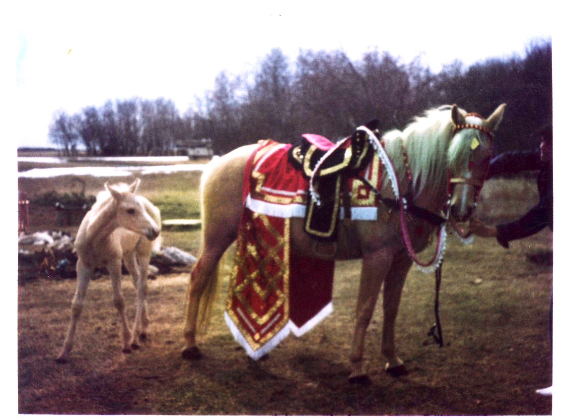 Rialla and horse costume