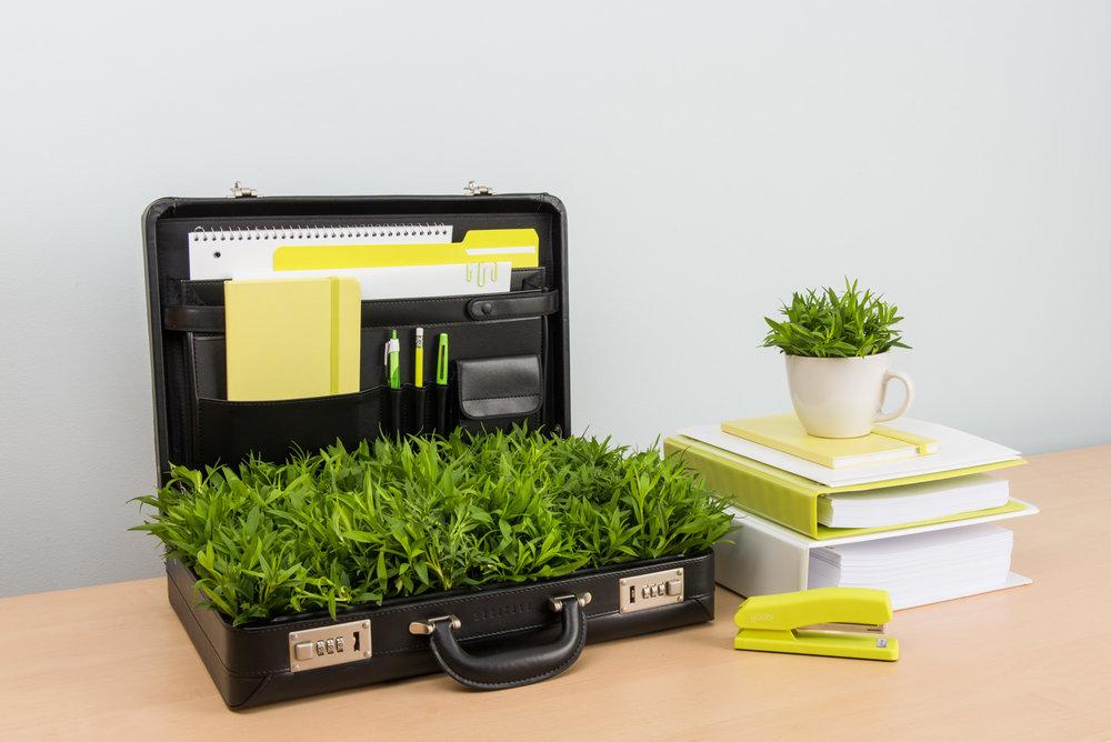 Briefcase-4384.jpg