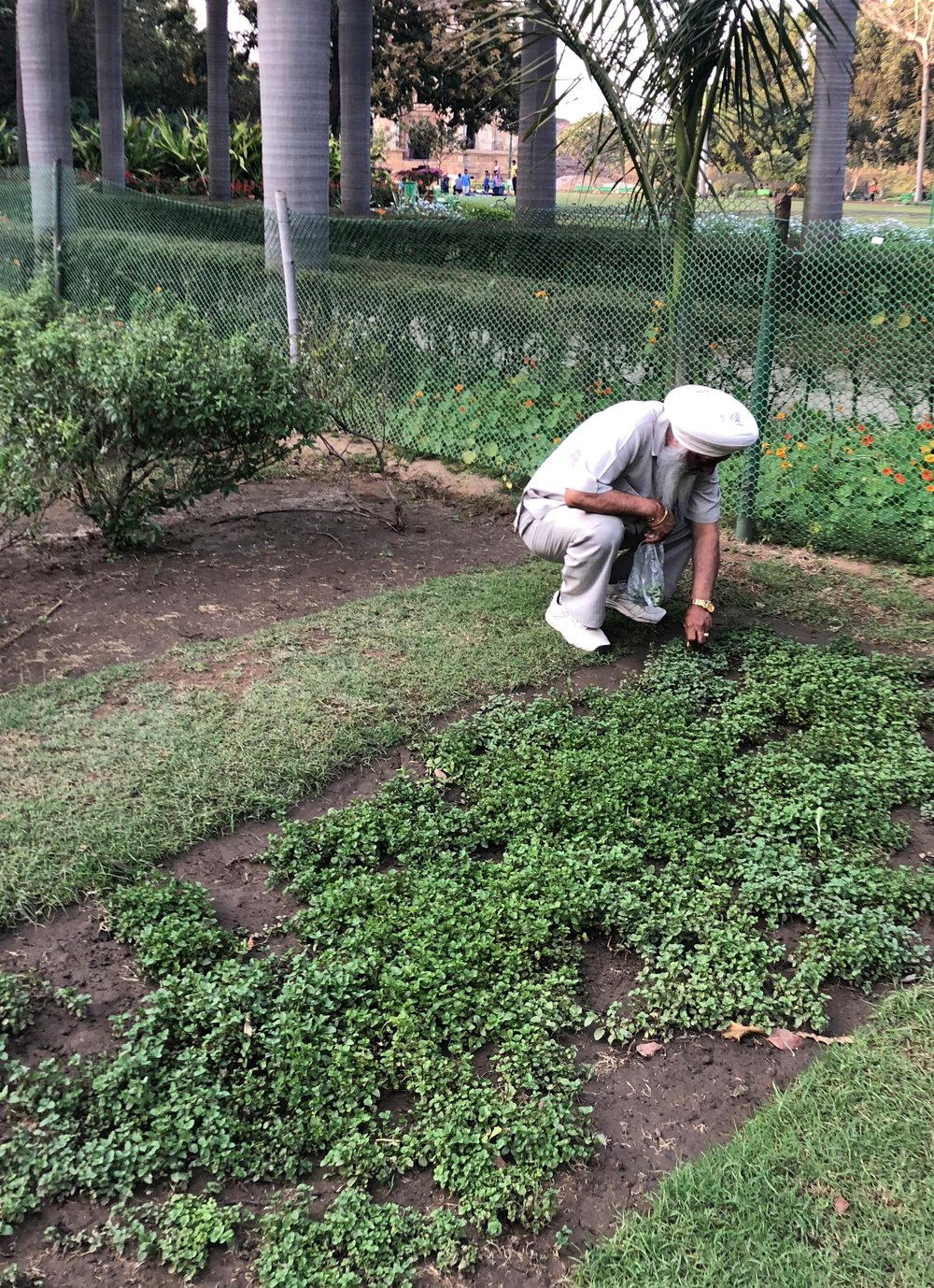 Picking basil in a community garden in Delhi