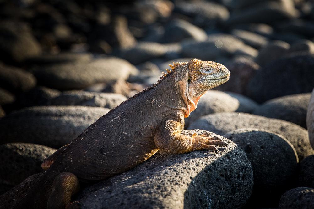 Galapagos-100.jpg