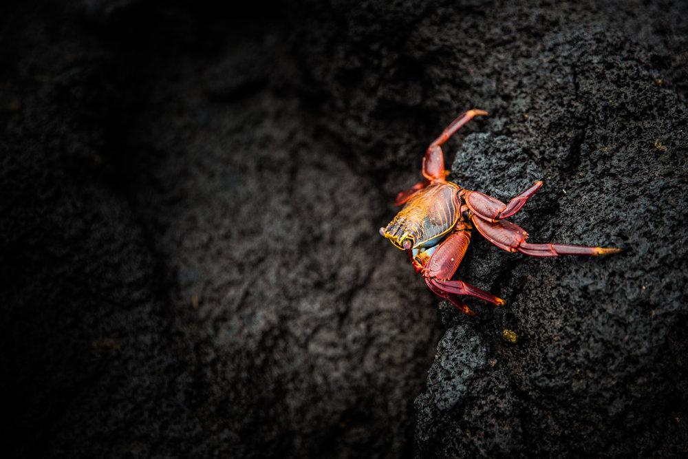 Galapagos-184.jpg