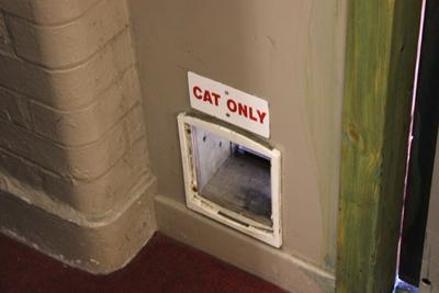 Bunker Cat!
