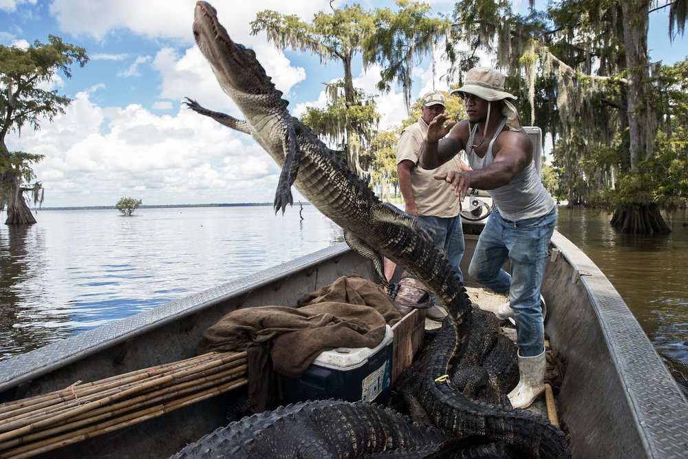Swamp People 8