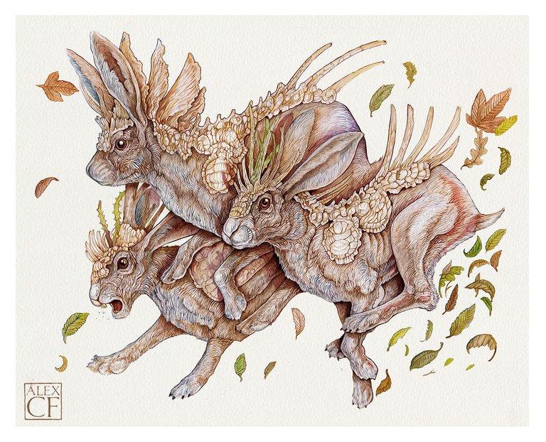 hares+copy.jpg